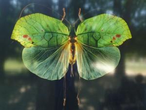 papillon-vert-300x225